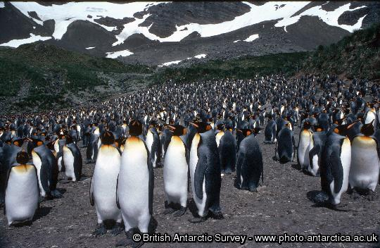 Penguin of the Day - 2013-05-07