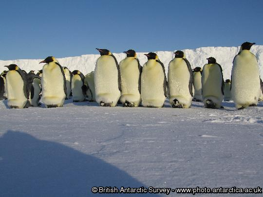 Penguin of the Day - 2012-11-16
