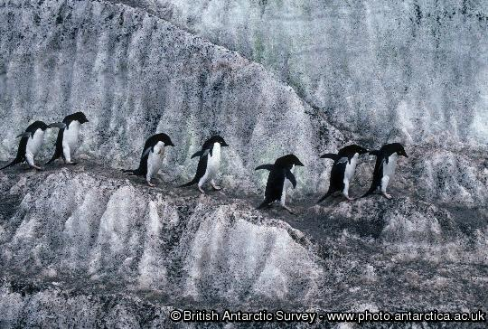 Penguin of the Day - 2009-01-01