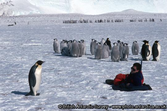 Penguin of the Day - 2012-12-10