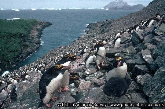 Penguin of the Day - 2013-08-22