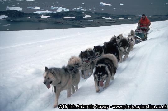 Huskies pulling a sledge on the ice piedmont, Adelaide Island, behind Rothera research station.