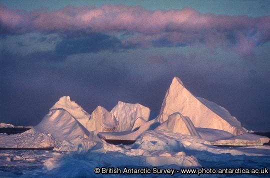 Sculptured icebergs grounded in North Bay, Rothera Point, Adelaide Island.