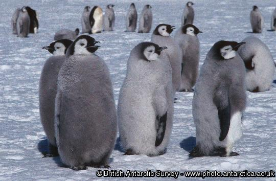Penguin of the Day - 2012-11-07