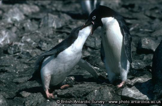 Penguin of the Day - 2012-10-24