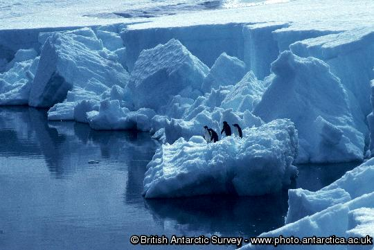 Adelie Penguins in front of the Ice Cliffs at Rothera Point on Adelaide Island.