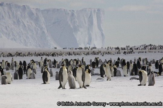 Penguin of the Day - 2012-11-20