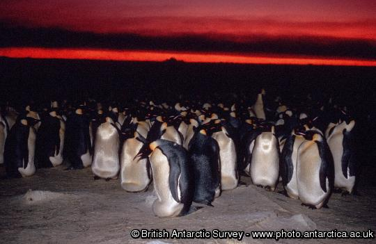 Penguin of the Day - 2012-10-27