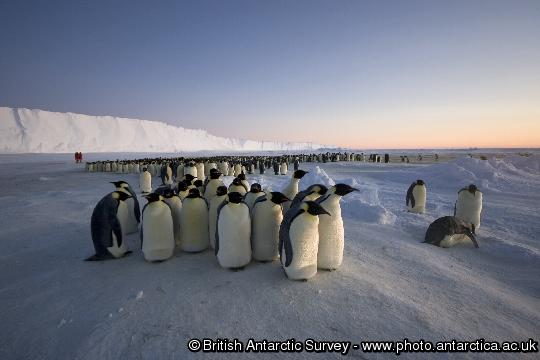 Penguin of the Day - 2013-02-15