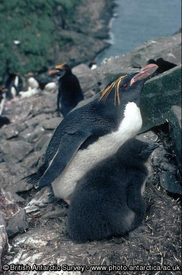 Penguin of the Day - 2014-11-26