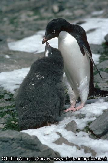Penguin of the Day - 2014-09-02