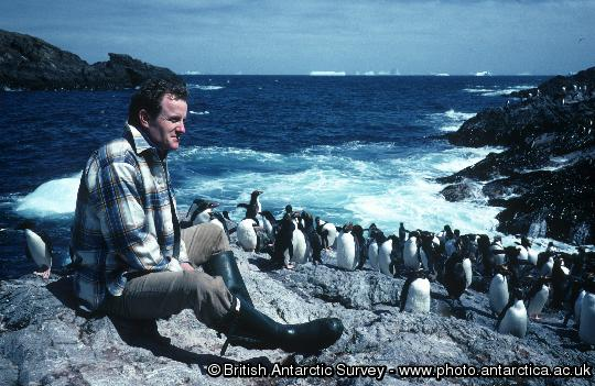 Penguin of the Day - 2013-05-06