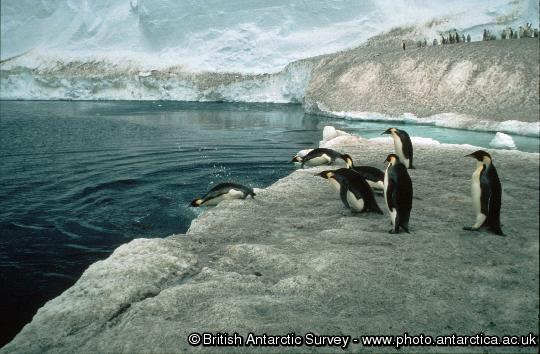 Penguin of the Day - 2013-04-10