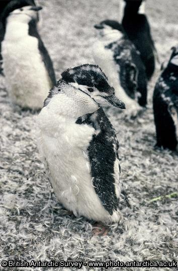 Penguin of the Day - 2012-10-26