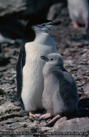 Penguin of the Day - 2012-10-30