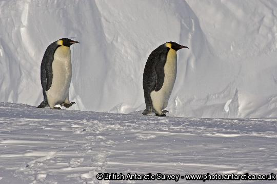 Penguin of the Day - 2012-11-03