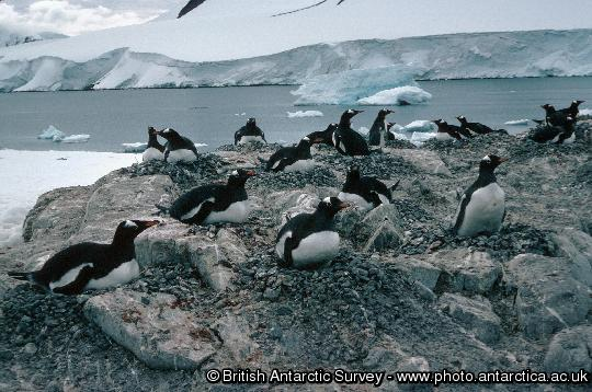 Penguin of the Day - 2013-04-05