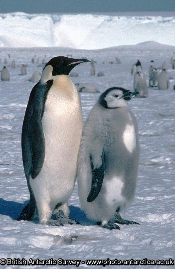Penguin of the Day - 2013-08-23