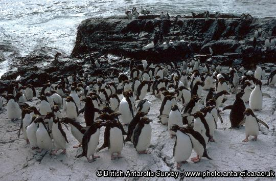 Penguin of the Day - 2012-12-07