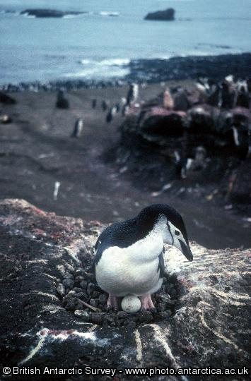Penguin of the Day - 2012-05-09