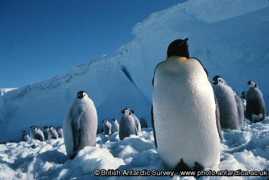 Penguin of the Day - 2013-01-08