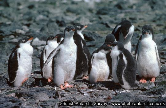 Penguin of the Day - 2012-11-25