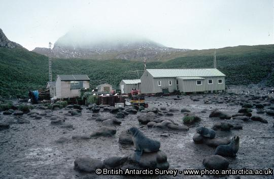Fur seals on the beach in front of Bird Island Research station
