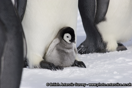 Image of the Day - 2012-10-13