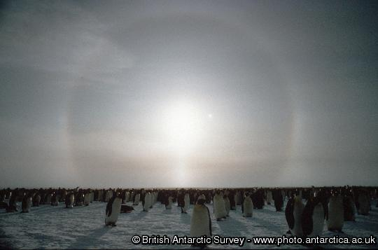 Penguin of the Day - 2012-10-21