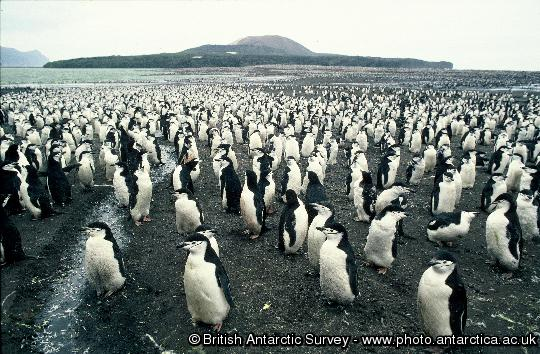 Penguin of the Day - 2013-01-20