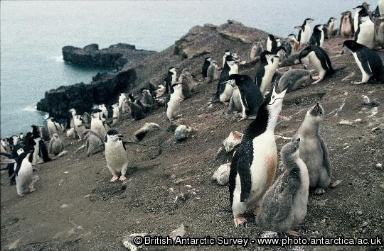 Penguin of the Day - 2013-01-31