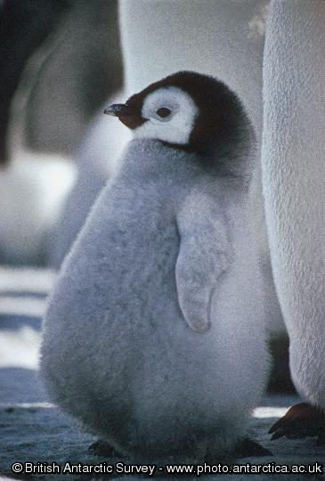 Penguin of the Day - 2012-04-30