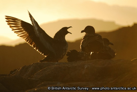 Image of the Day - 2014-04-11