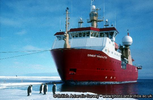 RRS Ernest Shackleton  tied up against the sea ice on the Brunt Ice Shelf with Emperor penguins (Aptenodytes forsteri) in the foreground