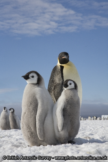 Penguin of the Day - 2012-12-05