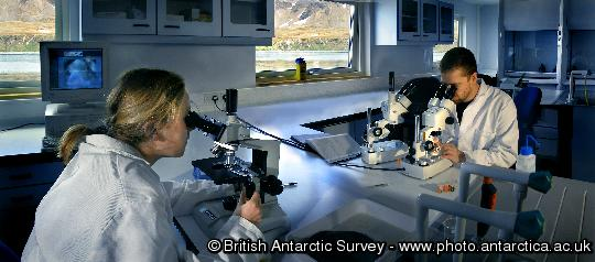 BAS marine scientists Judith Dickson and Simon Morley (Snr Scientist) working in the dry lab at King Edward Point Research Station, South Georgia.