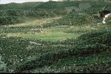 Tussock grass ( Parodiochloa flabellata , dark green) and Antarctic hair grass ( Deschampsia antarctica , light green) lawn