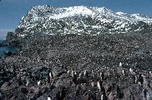 Chinstrap Penguin Colony (Pygoscelis antarctica) at, North Point, Signy Island, South Orkney Islands