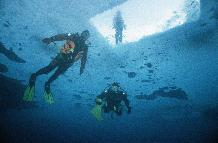 Divers under newly formed fast ice.