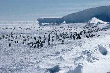 Emperor penguin (Aptenodytes forsteri) colony on the sea ice close to Halley Research Station on the Brunt Ice Shelf