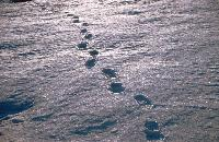 Footsteps in the snow near Rothera Research Station.